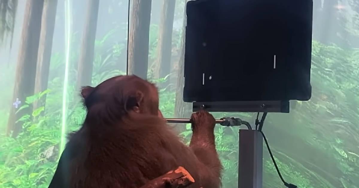 Affe-spielt-Pong-mit-seinen-Gedanken